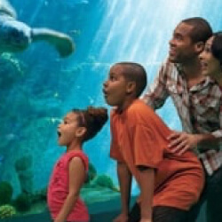 SeaWorld® Orlando Resort