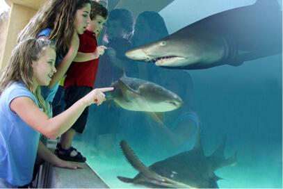 Aquarium of the Pacific: Aquarium Admission