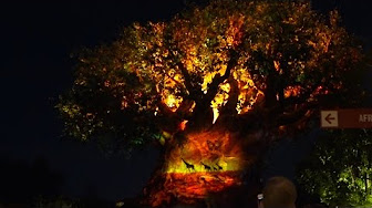 Tree of Life Projection Show