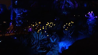 Valley of Mo`ara at Night, Pandora