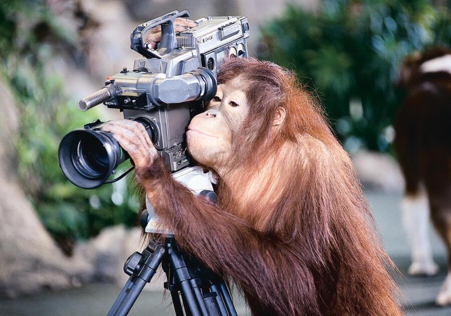 Animal Actors On Location!