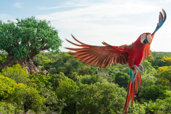 Animal Encounters: Winged Encounters – The Kingdom Takes Flight