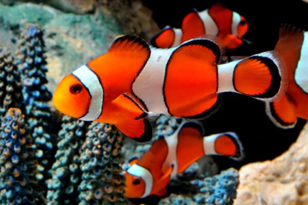 Aquarium de la Mer