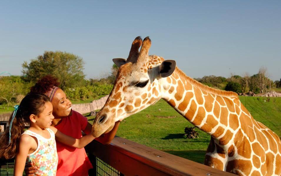 Top Busch Gardens® Tampa Bay Videos And Photos
