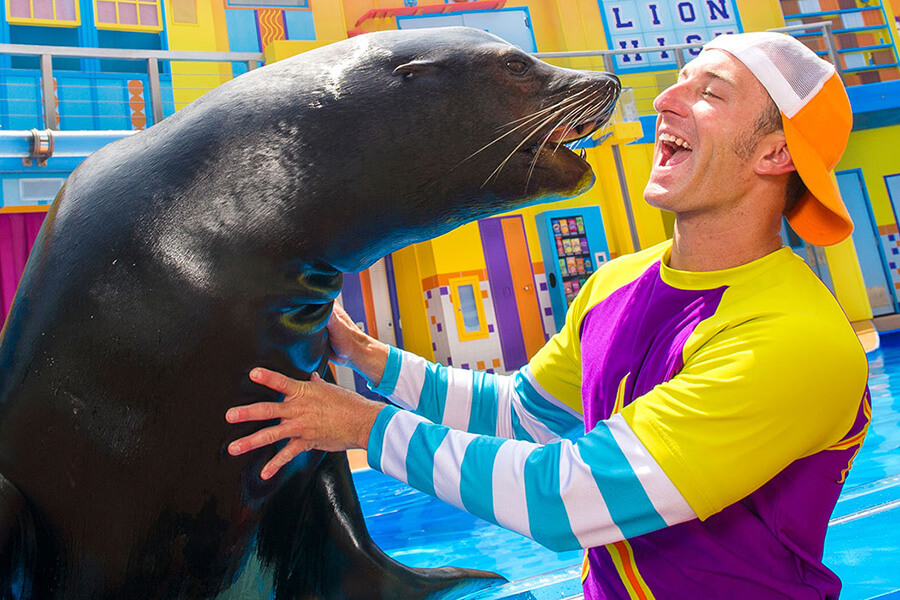 Sea Lion High: The New Class