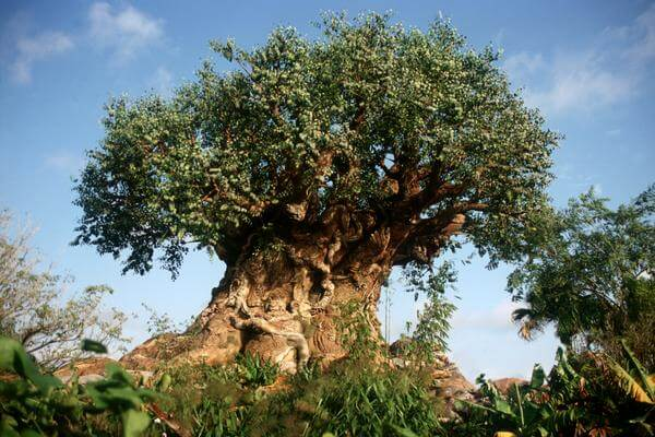 Disney's Animal Kingdom® Theme Park Park Plan