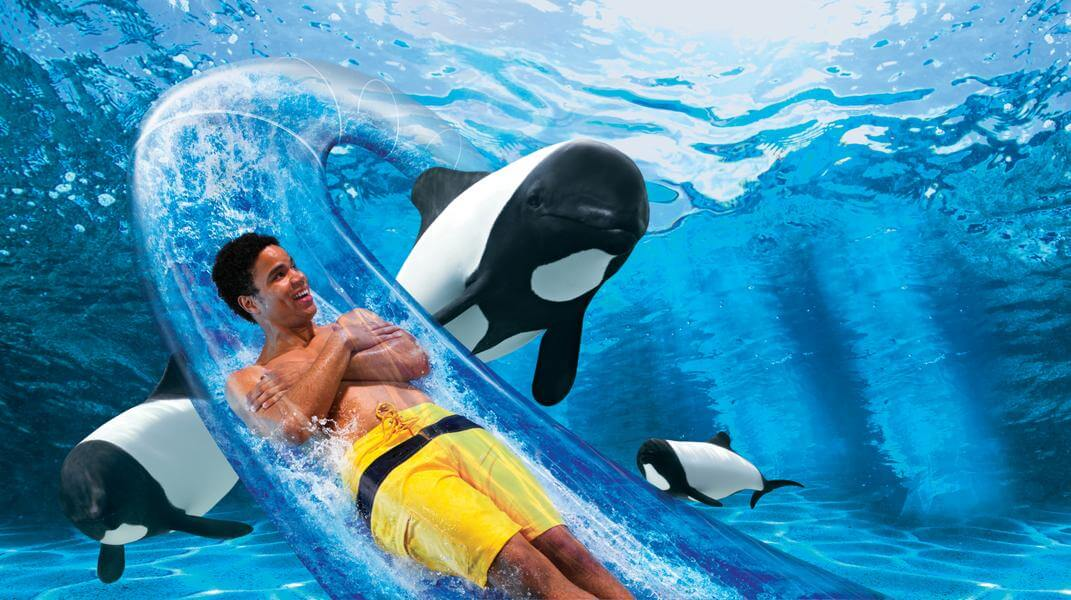 Dolphin Plunge®
