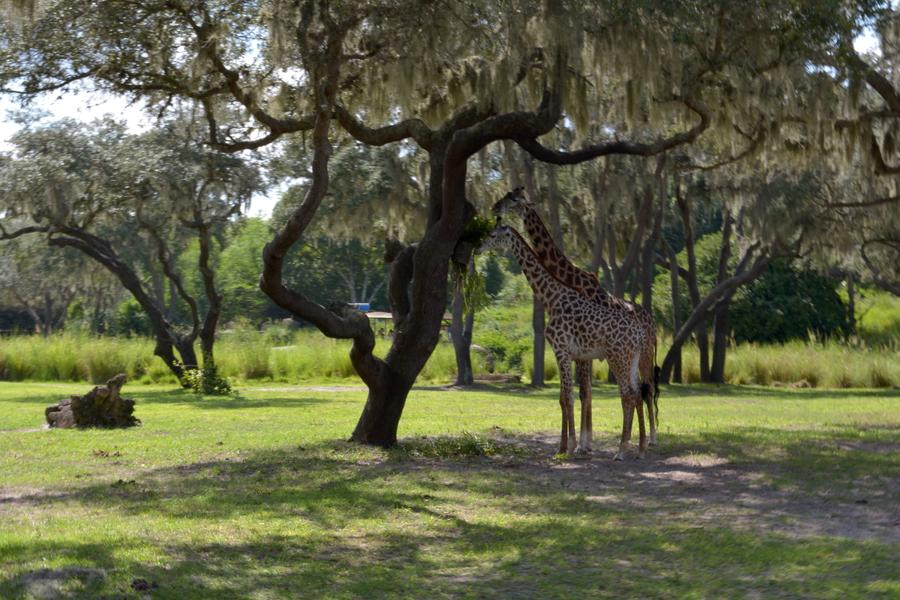 Kilimanjaro Safaris® Expedition