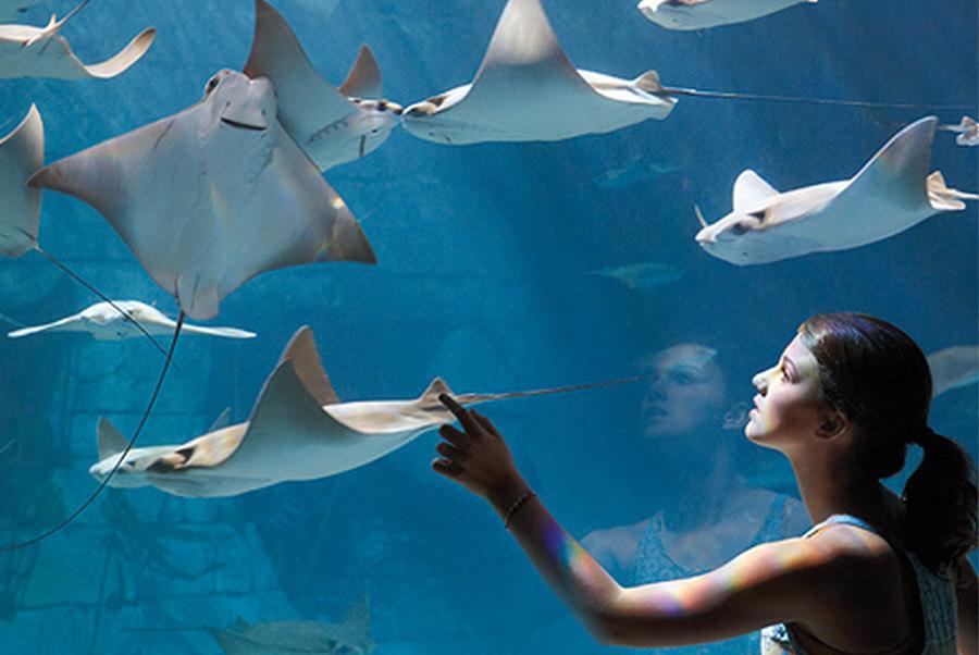 Manta Aquarium®