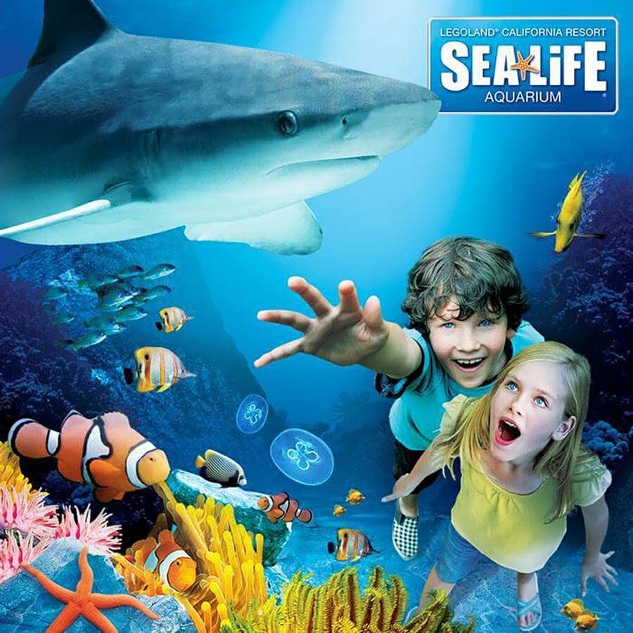 Enter and explore the marine realm of S.E.A. Aquarium, home to more than , marine animals of over 1, species, across 50 different habitats, each one as fascinating as the next.