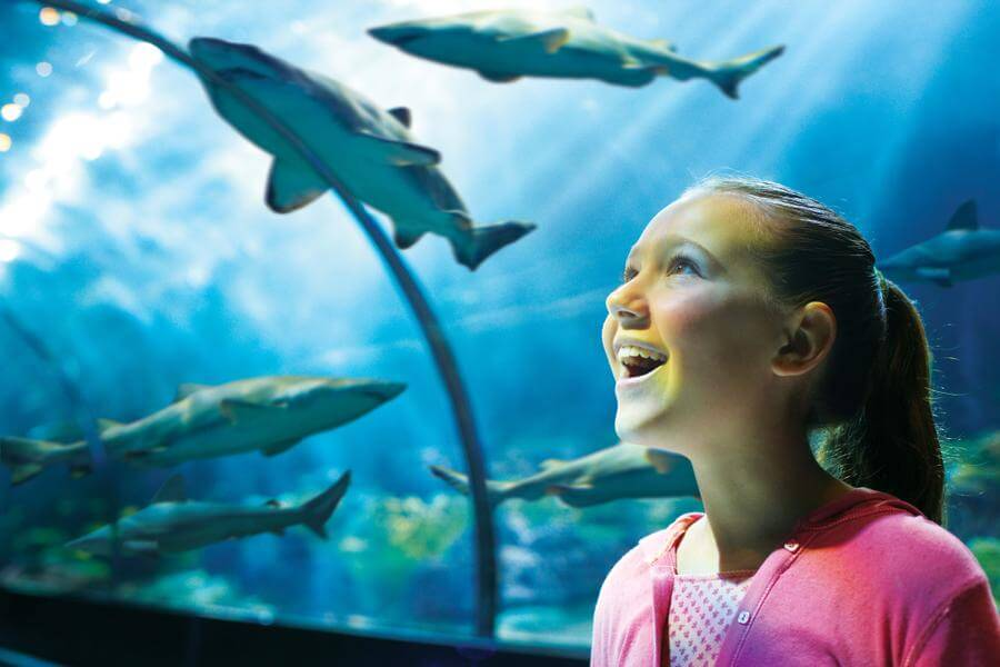 Seaworld San Diego Sharks