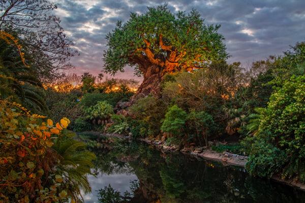Tarzan on Discovery Island