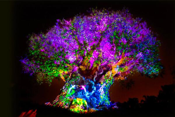 Tree of Life Awakenings