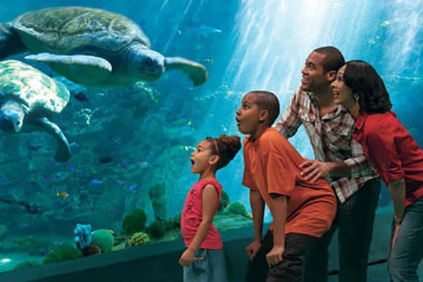 Turtle Reef