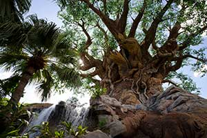 Disney's Animal Kingdom® Theme Park 1-Day Without FastPass+ or Characters