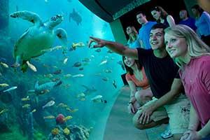 SeaWorld Orlando 1-Day