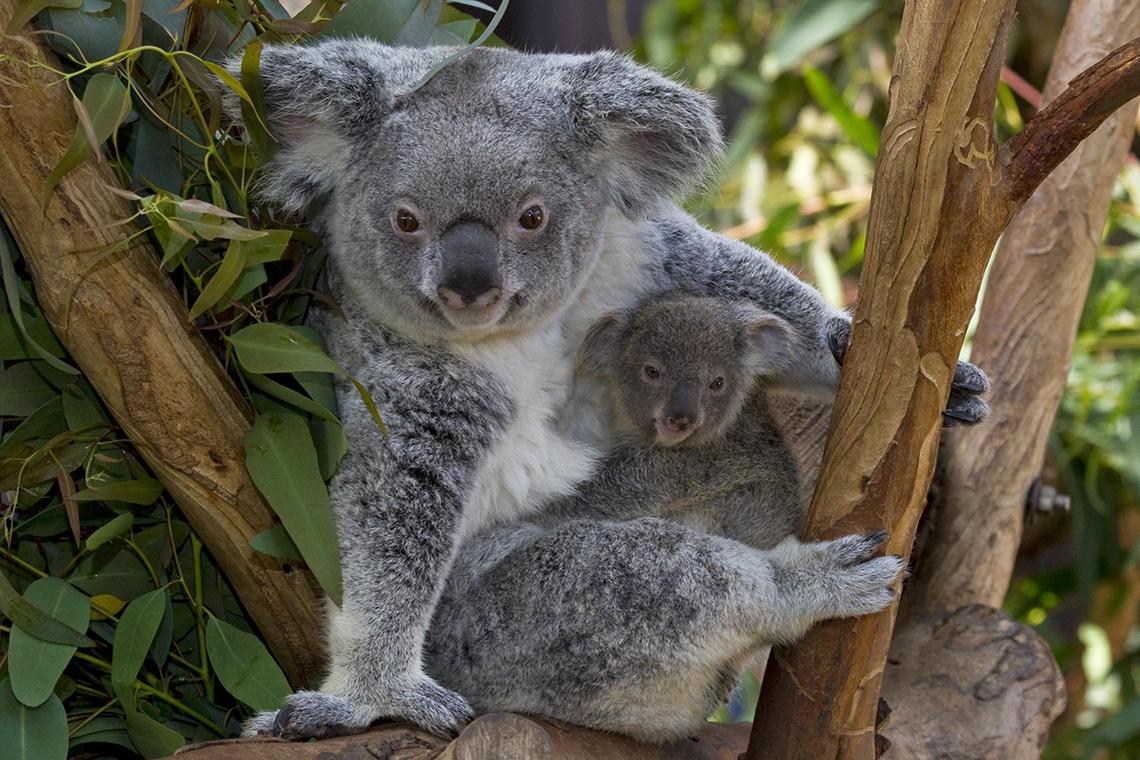 San Diego Zoo: 1-Day Pass