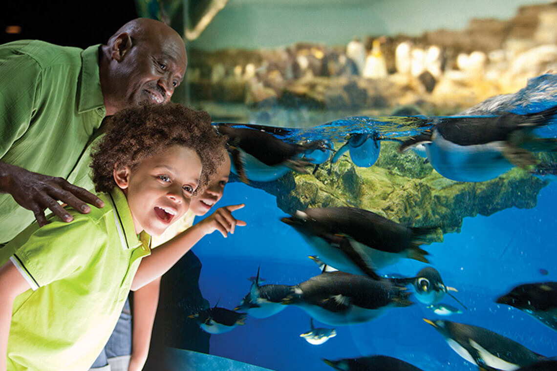 SeaWorld Orlando U0026 Busch Gardens Tampa 2 Park 2017 Fun Card