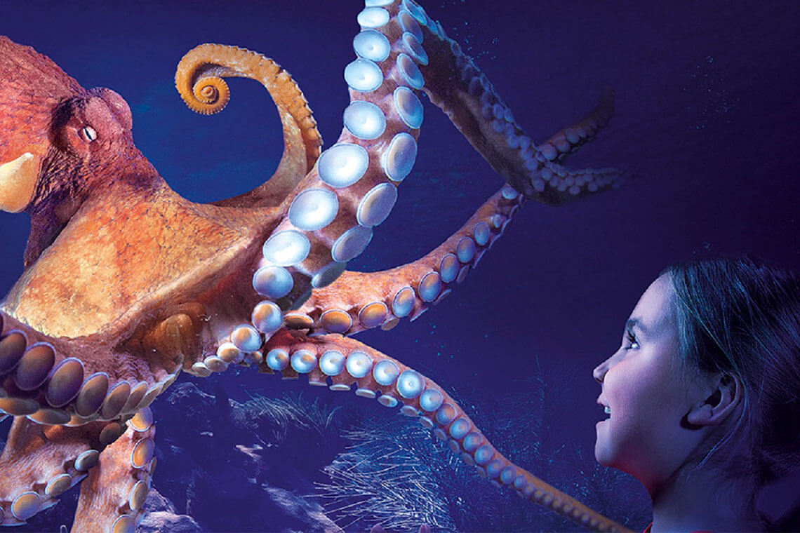 3 ATTRACTION COMBO: The Orlando Eye, Sealife Aquarium, & Madame Tussauds Attraction Ticket