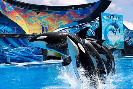 SeaWorld Parks: Three Park Ticket (Buy One Get One 50% Off)