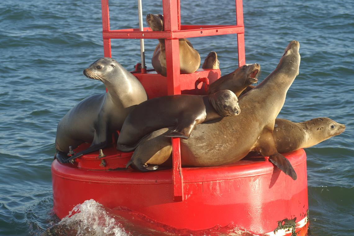 San Diego Harbor Cruise & Sea Lion Adventure (Two Hour) Kids FREE October PROMO
