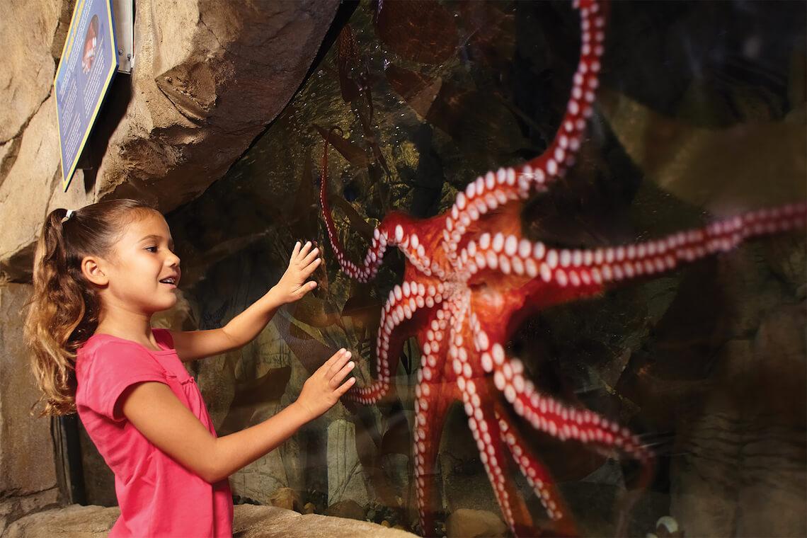 LEGOLAND California & SEA LIFE Aquarium Hopper + 2nd Day FREE (PROMO)