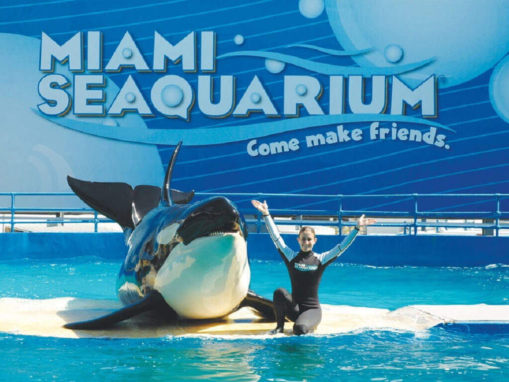 Miami Seaquarium General Admission
