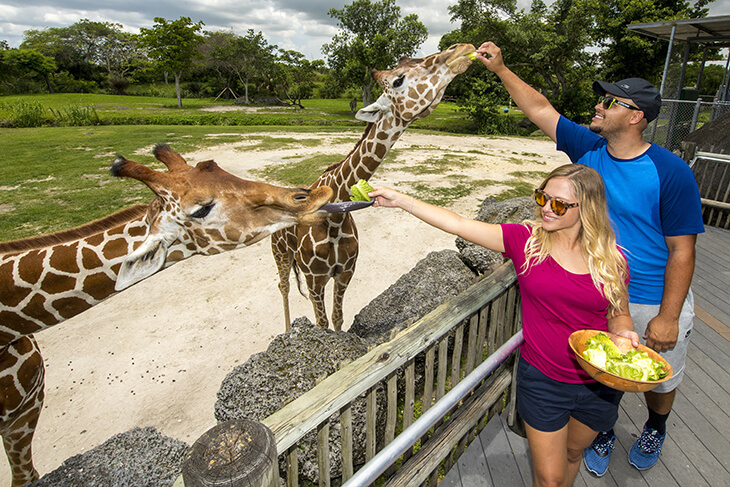 Zoo Miami: Admission + Food Package