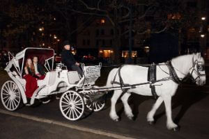 Central Park Horse & Carriage Tour: Short Ride