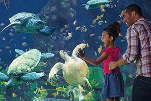 SeaWorld Orlando 2021 Fun Card (PROMO)