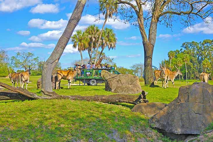 Busch Gardens Tampa 2021 Fun Card (BLACK FRIDAY SALE)