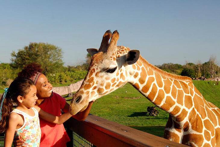 Busch Gardens Tampa WEEKDAY Single Day + All Day Dine (PROMO)