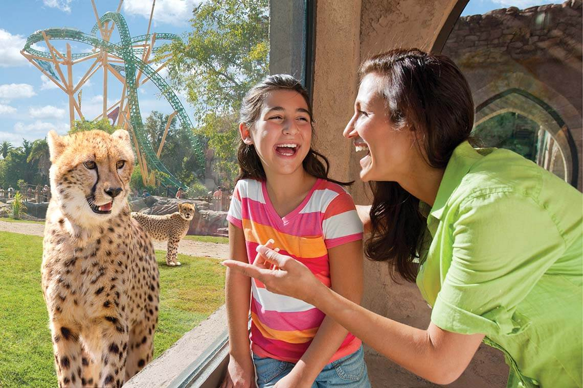 Busch Gardens Tampa Single Day Ticket- Advance Purchase