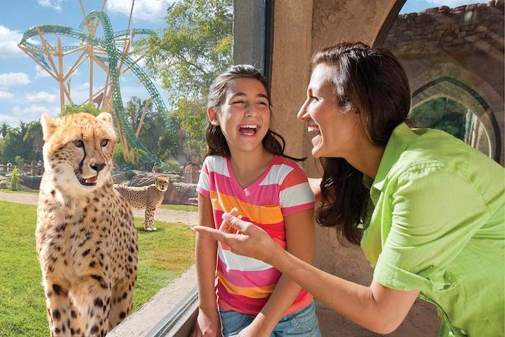 Busch Gardens Tampa Single Day Ticket (BLACK FRIDAY SALE)