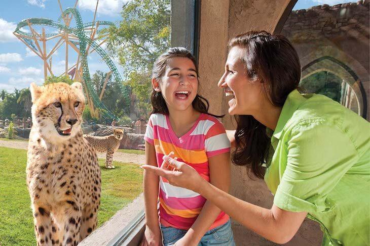 Busch Gardens Tampa Single Day + Meal Voucher (PROMO)