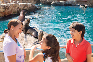 SeaWorld Parks: Two Park Ticket (SPECIAL OFFER)