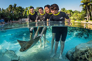 Discovery Cove Only - Day Resort Package + FREE $50 Gift Card (PROMO FREE GIFT CARD)