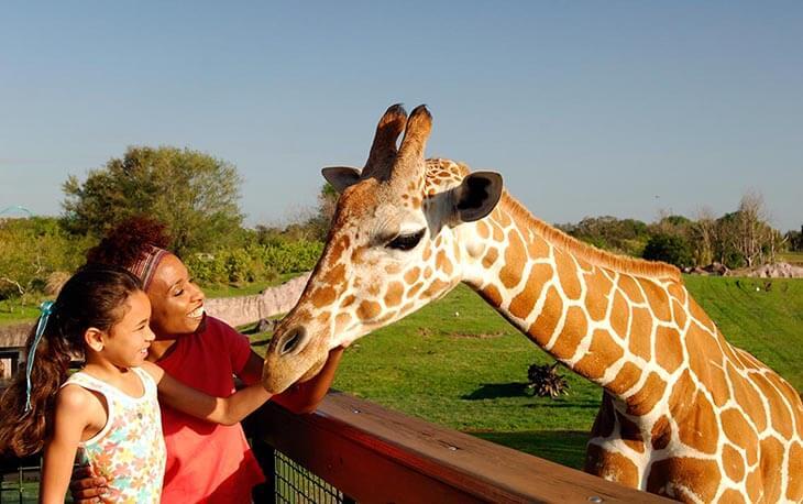 SeaWorld Orlando, Aquatica, Busch Gardens Tampa & Adventure Island 4-Park Silver Annual Pass