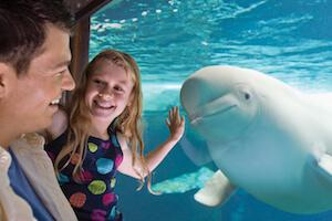 SeaWorld Orlando, Aquatica, Busch Gardens Tampa & Adventure Island 4-Park Silver Annual Pass (PROMO)