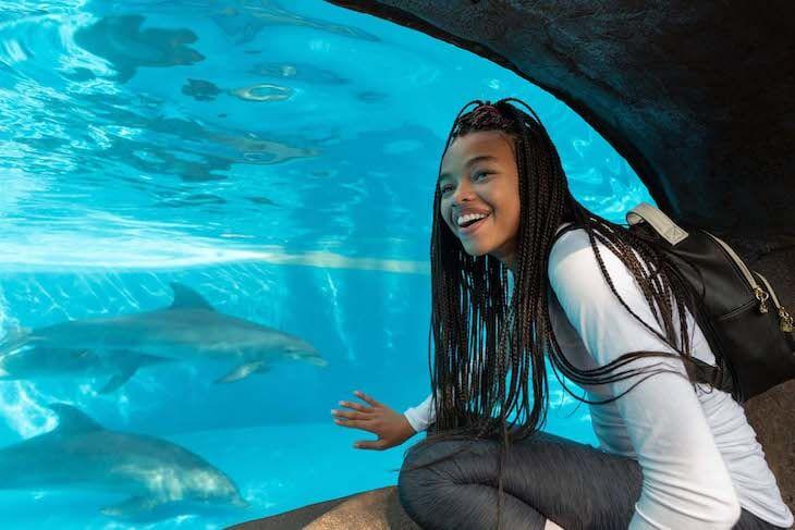 SeaWorld Orlando Single Day