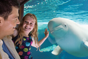 SeaWorld Orlando Single Day + FREE Meal Voucher (PROMO)