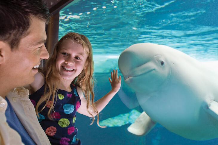 SeaWorld Orlando Single Day + Meal Voucher (PROMO)