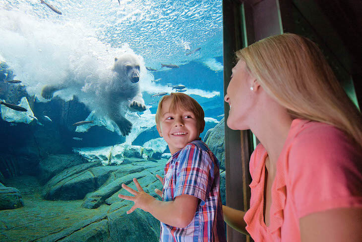 SeaWorld Orlando Single Day + Kids FREE Ticket