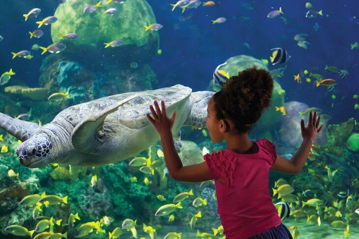 SeaWorld Orlando Single Day with All Day Dine (BLACK FRIDAY SALE)