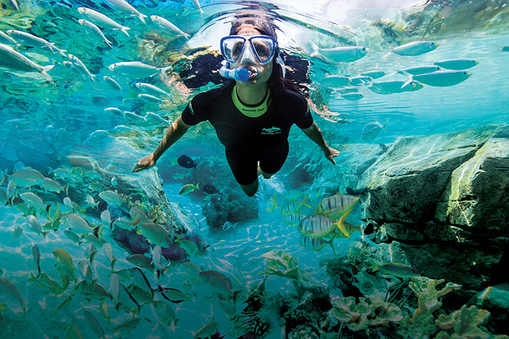 Discovery Cove - Ultimate Day Resort Package
