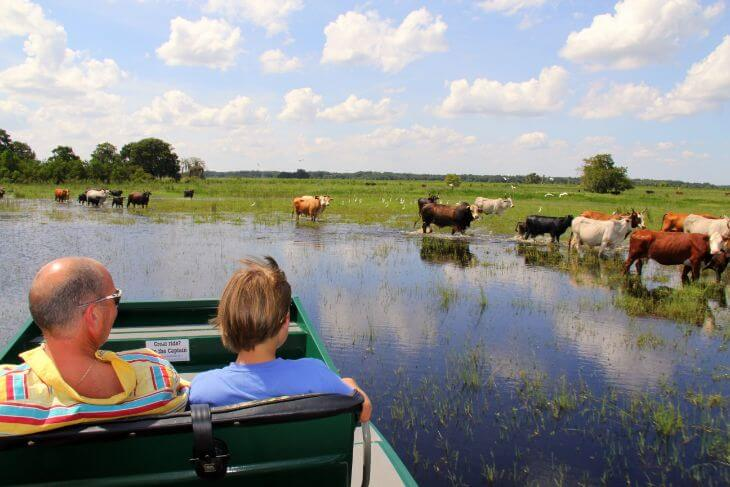 Wild Florida: 1-Hour Airboat Tour