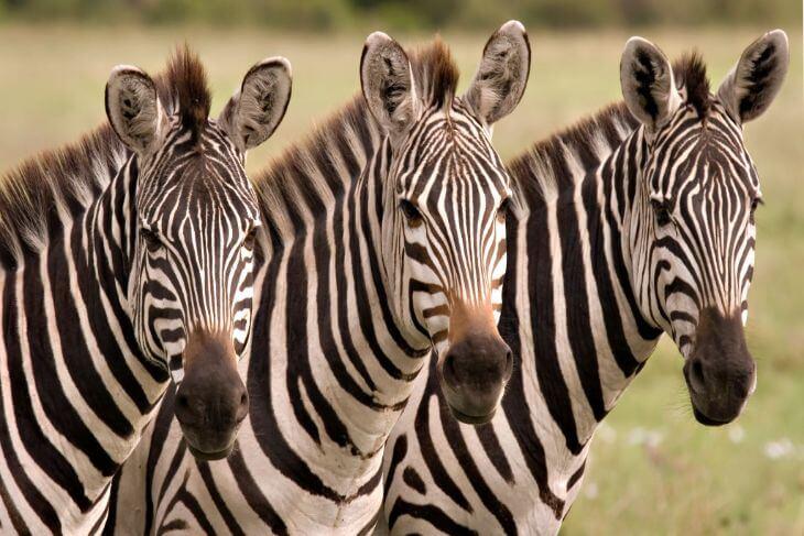 Wild Florida: Drive-Thru Safari Park