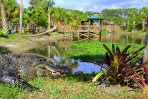Wild Florida: Gator Park