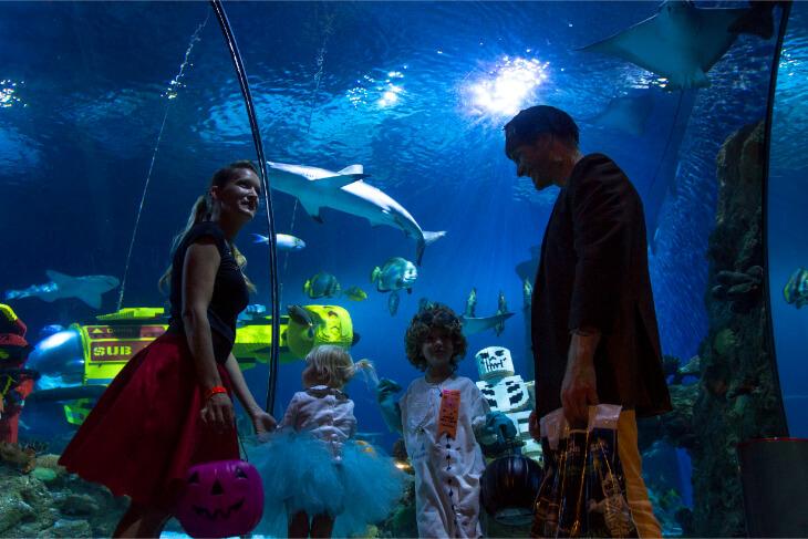 1-Day LEGOLAND California + SEA LIFE Aquarium + Brick-or-Treat Event Ticket