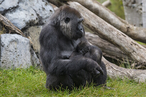 San Diego Zoo: 2-Visit Pass